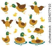 A Set Of Wild Ducks In...