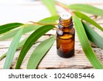 eucalyptus essential oil and... | Shutterstock . vector #1024085446