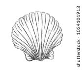 Shell Engraving. Panoramic...