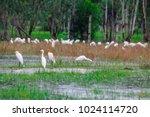 huge flock of great white...   Shutterstock . vector #1024114720