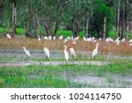 huge flock of great white...   Shutterstock . vector #1024114750
