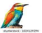 bright colors of birds on... | Shutterstock . vector #1024129294