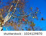 colorful lamps on the tree. | Shutterstock . vector #1024129870