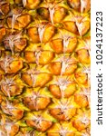 pineapple skin for background.... | Shutterstock . vector #1024137223