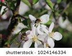 bees on a flower | Shutterstock . vector #1024146334