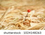 closeup of a needle in haystack | Shutterstock . vector #1024148263