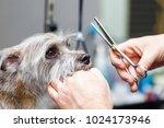 groomer cutting hair of small... | Shutterstock . vector #1024173946
