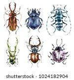 watercolor beetles collection... | Shutterstock . vector #1024182904