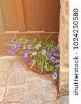 viola tricolor in the flowerbed ... | Shutterstock . vector #1024230580