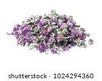 Dry Herb Origanum Vulgare ...