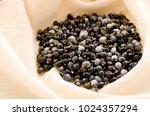 job's tears   coix lachryma... | Shutterstock . vector #1024357294
