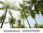 palm trees in the sunny day... | Shutterstock . vector #1024370230