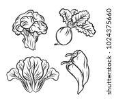 set of vegetables doodles vector   Shutterstock .eps vector #1024375660
