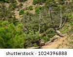 beautiful summer sea landscape...   Shutterstock . vector #1024396888