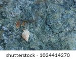 fossil shells on the rock  sea... | Shutterstock . vector #1024414270