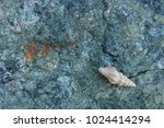 fossil shells on the rock  sea... | Shutterstock . vector #1024414294
