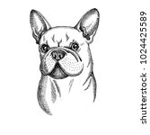 hand drawn vector dog. french... | Shutterstock .eps vector #1024425589