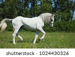 andalusian white horse... | Shutterstock . vector #1024430326
