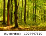 forest of deciduous trees in... | Shutterstock . vector #1024447810