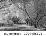 tree image taken with infrared... | Shutterstock . vector #1024456828
