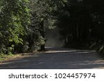 forest path flooded with... | Shutterstock . vector #1024457974