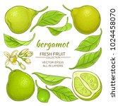 bergamot elements set | Shutterstock .eps vector #1024458070