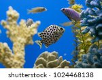 funny beautiful fish on the... | Shutterstock . vector #1024468138