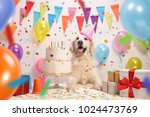 labrador retriever dog with a... | Shutterstock . vector #1024473769