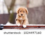 adorable red puppy portrait... | Shutterstock . vector #1024497160