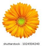 yellow orange gerbera flower ... | Shutterstock . vector #1024504240