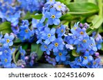 bouquet of blue forget me on a... | Shutterstock . vector #1024516096