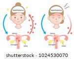 mechanism of menopause and... | Shutterstock .eps vector #1024530070