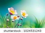 beautiful pink flowers anemones ... | Shutterstock . vector #1024531243