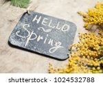 mimosa flowers hello spring... | Shutterstock . vector #1024532788