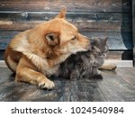 huge dog licks unhappy cat.... | Shutterstock . vector #1024540984