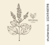 patchouli  patchouli branch...   Shutterstock .eps vector #1024548598