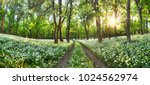 walkway through a spring forest ... | Shutterstock . vector #1024562974