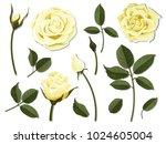 a set of flower parts.... | Shutterstock .eps vector #1024605004