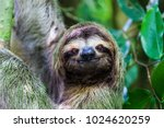 Small photo of sloth, Manuel Antonio National Park, Costa Rica, Central America