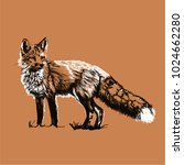 red fox vector illustration ... | Shutterstock .eps vector #1024662280