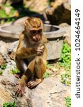 monkey at sunny day at monkey... | Shutterstock . vector #1024664149