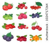 berry vector berrying mix of...   Shutterstock .eps vector #1024717264