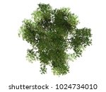mangrove tree top view on white ... | Shutterstock . vector #1024734010