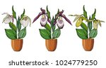 hand drawn set of orchids in... | Shutterstock .eps vector #1024779250
