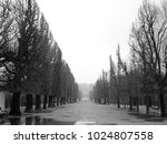 The Tree Avenue After Rain In...