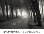 path in a forest covered with... | Shutterstock . vector #1024808713