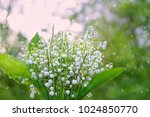 lilies of the valley on ... | Shutterstock . vector #1024850770