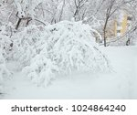 winter view on fallen trees on... | Shutterstock . vector #1024864240