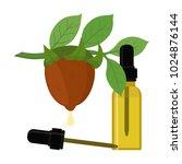 jojoba branch  simmondsia...   Shutterstock . vector #1024876144