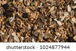 seasoning for pickling spice.... | Shutterstock . vector #1024877944